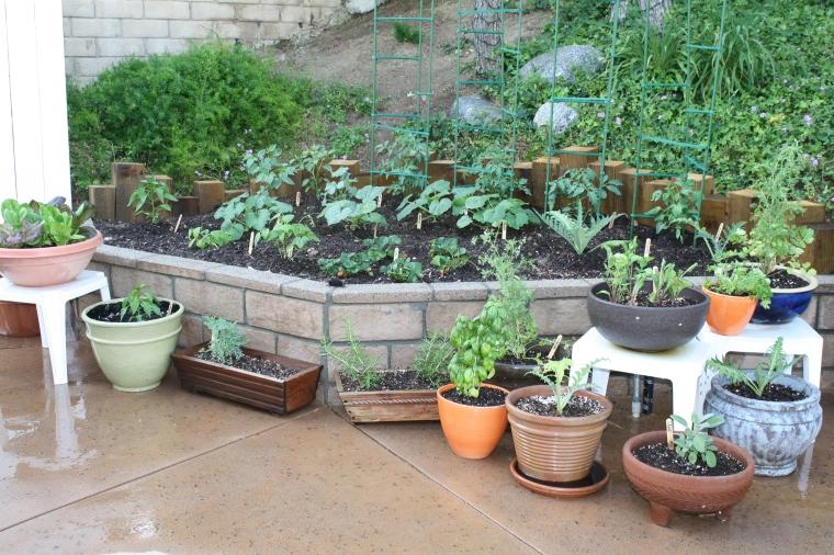 Garden 11 days after planting