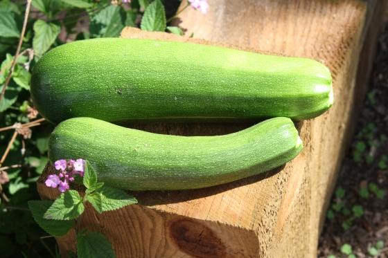 and these weren't even the largest of the zucchinis!